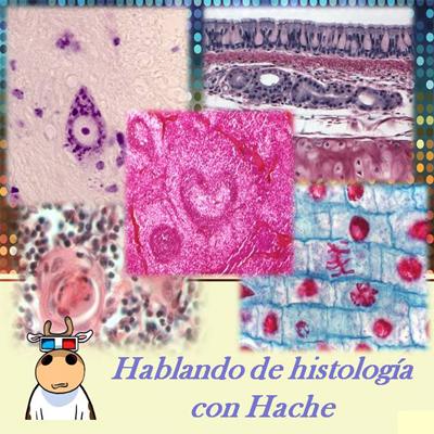 <![CDATA[Hablando histología con Hache (Podcast) - www.poderato.com/eddilew]]>